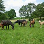 pferdegruppe auf weide